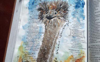 Sneue Struisvogel